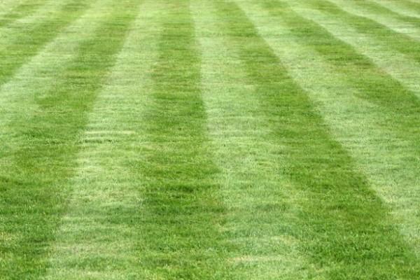 grass-1399455664tOD